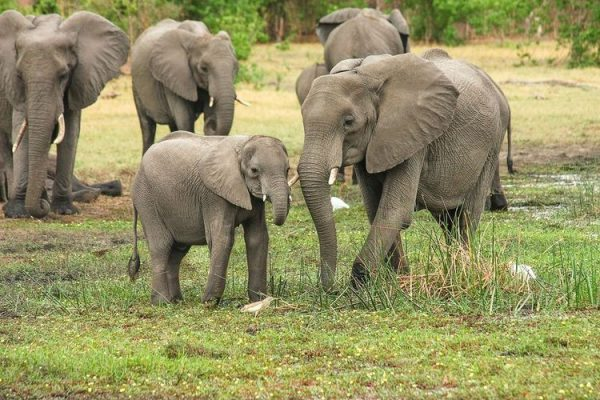 After UK's ivory ban, European Commission also considering tighter regulation