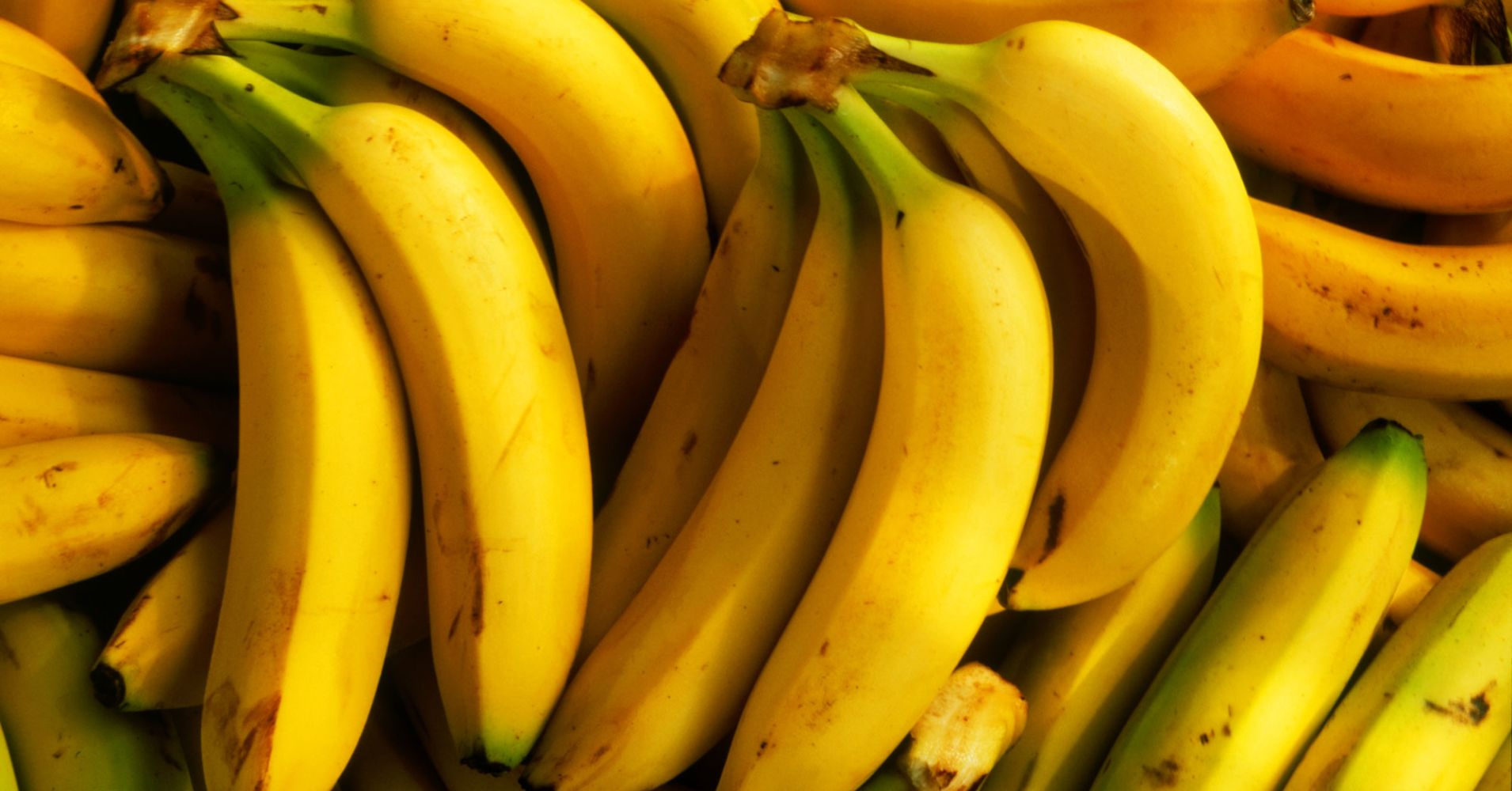 The banana industry is under threat because of Panama disease