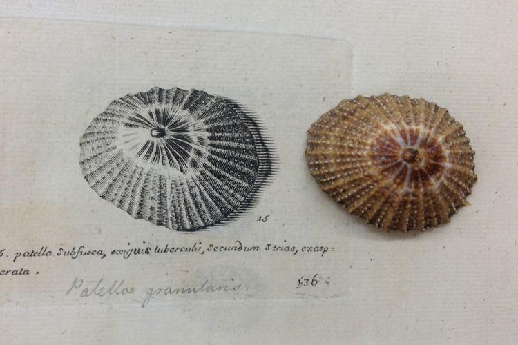 Coming out of one's shell: new book explores overlooked mollusc art by naturalist's daughters