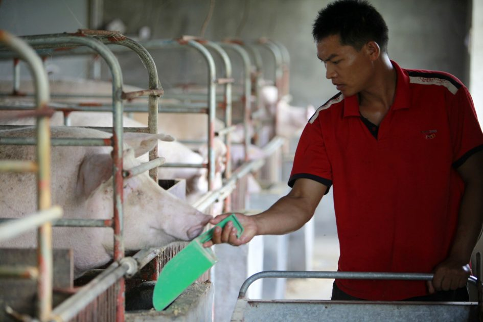 China soybean demand is surprisingly high despite swine fever outbreak