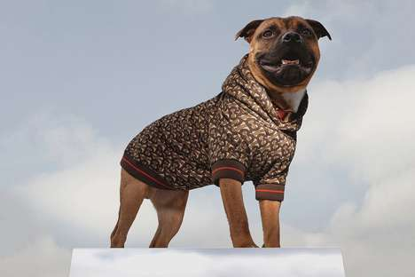 Luxurious Stylish Dog Hoodies : stylish dog hoodie