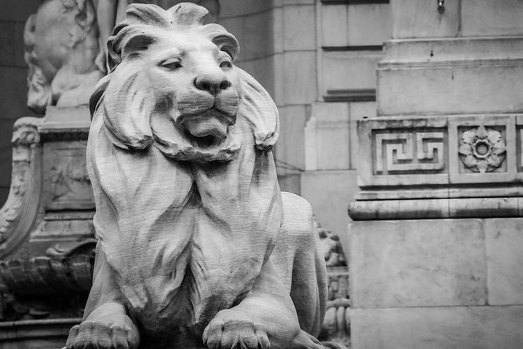 New York Public Library shores up its marble lions