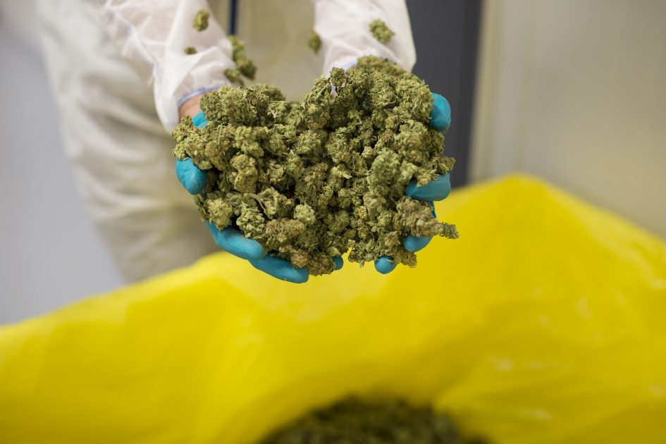 Weed industry scandals show why investors must be 'selective'