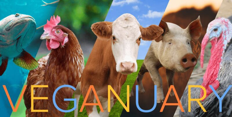 Veganuary Cheat Sheet Campaigns