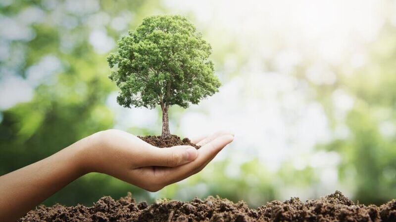 Haircare-Backed Reforestation Campaigns